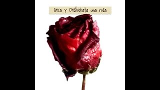 DIY seca deshidrata y conserva tu rosa natural dehydrated and dry natural roses