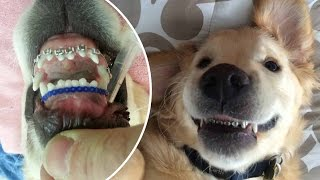 Pampered pets, animals doing human things, first world animal problems and more - Compilation