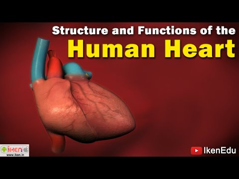 Structure and Functioning of Heart