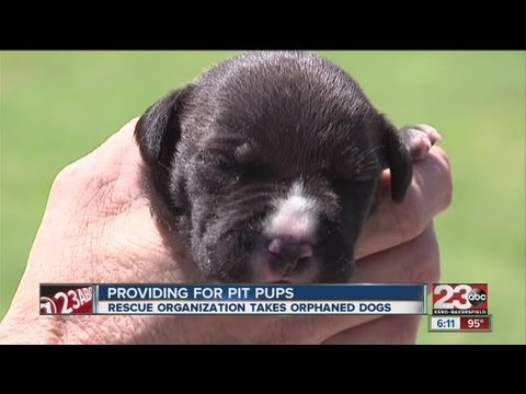Rescue organization helping pit bull puppies