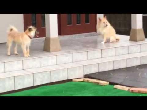 長崎県央犬と猫の会『とと』