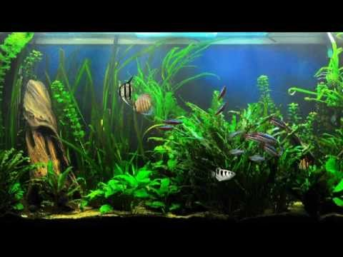 37 dream aquarium fish tank backgrounds youtube for Dreaming of fish