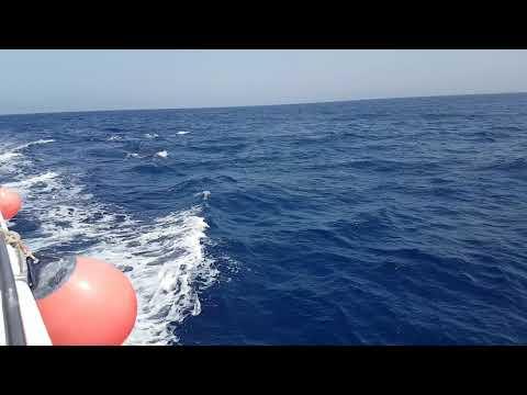 Delfinschwimmen im roten Meer-Delfin Tour Marsa Alam-Morgenland Reisen