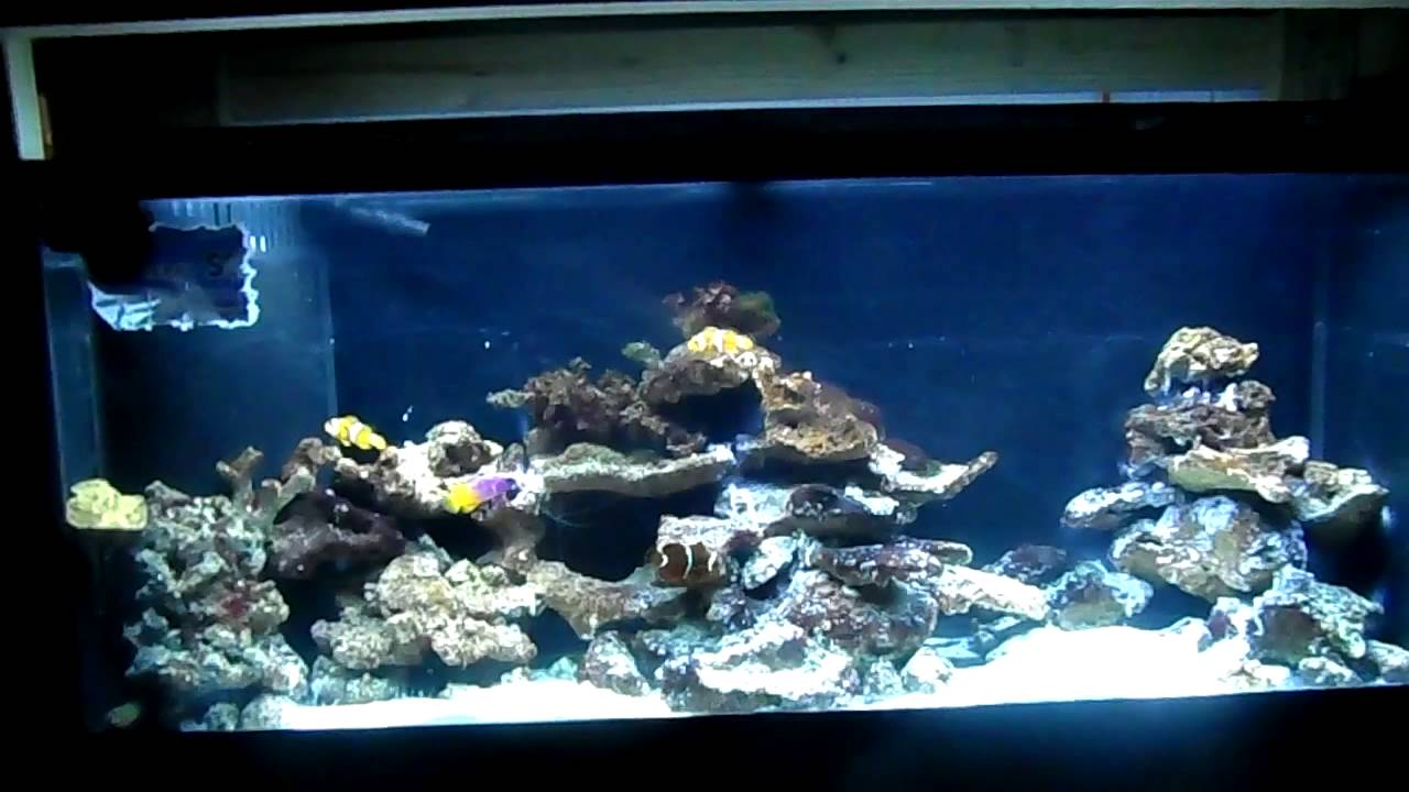 How to start and cycle an aquarium saltwater reef tank for Cycling a fish tank