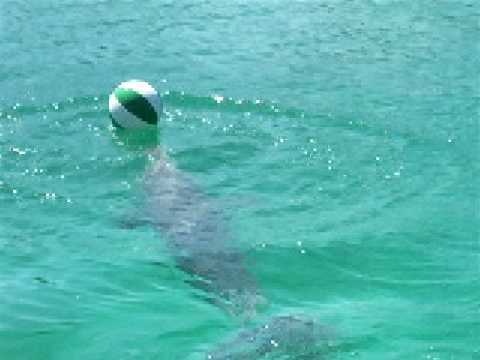 playing basket ball with the dolphins