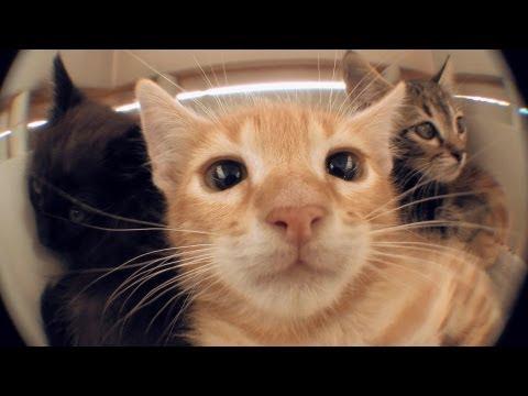image vidéo NORMAN - PETIT BEST OF DES VACANCES
