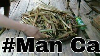 MAN CA rừng   DT Thái VN