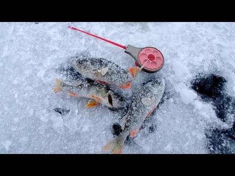 ловля плотвы на мормышку на течении с прикормом
