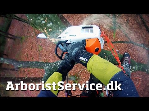 35 feet branch cut into manageable pieces - Arborist Training - Tree Climbing - Topkapning