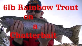 6lb Winter Rainbow Trout Off a Chatterbait While Bass Fishing ( Must Watch!)