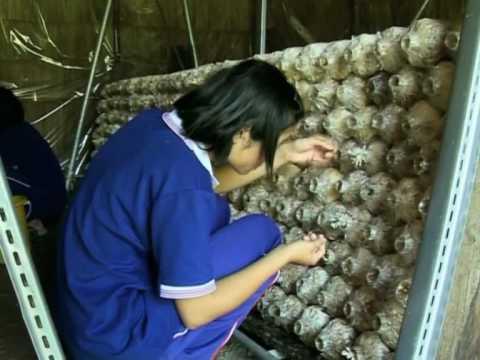 Combatting Child labour in Thailand