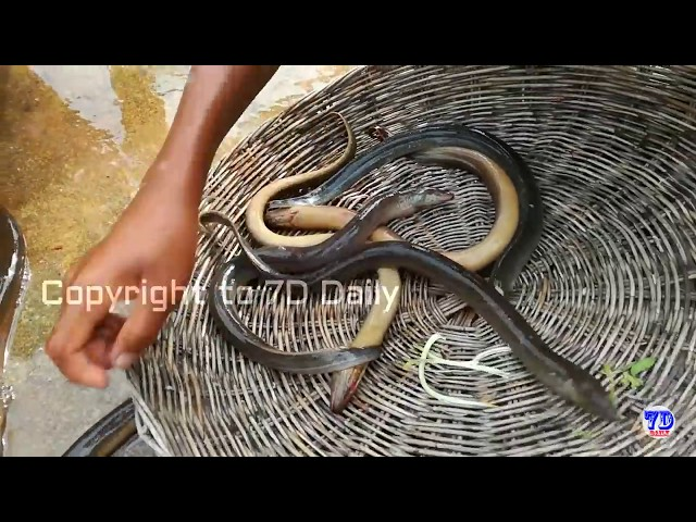Amazing!! How to Cook Eel in Cambodia - Countryside Food