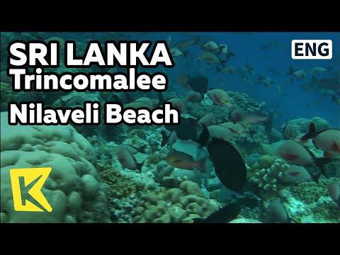 【K】Sri Lanka Travel-Trincomalee[스리랑카 여행-트링코말리]닐라벨리 해변, 스노클링/Nilaveli Beach/Ship/Coral/Sea/Snorkeling
