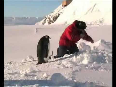 рыбалка в антарктиде промысел клыкача