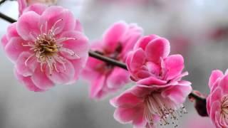 Ароматы и краски весны
