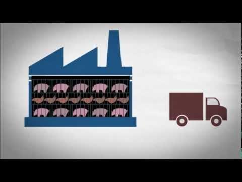 3+1 ok, amiért érdemes lenne kevesebb húst fogyasztani