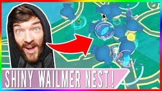 NEW BEST SHINY WAILMER NEST IN THE WORLD! Pokemon GO Shiny Wailmer Hunting!
