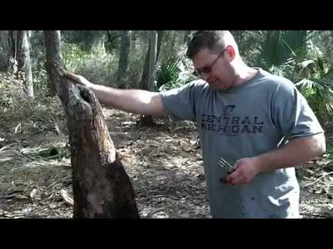 Collecting Bald Cypress for Bonsai Part 2: Schley's Bonsai