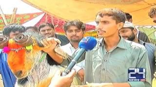 24 Report : Millions worth goat present in cattle market of Multan