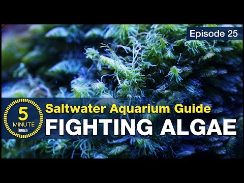 Get rid of algae once and for all. Not just control but beat algae in the reef tank.