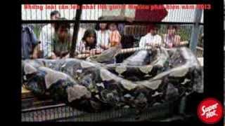 Video clip Những loài rắn lớn nhất thế giới ở Mexico phát hiện 2013 - Những con rắn TO KINH HỒN