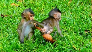 Ah! Sweetpea Eating Palm Fruit While Baby Lori Eating Grass After Raining Long Time |They So Hungry