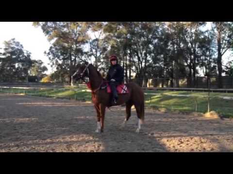 2yo colt Exceed & Excel in Sydney