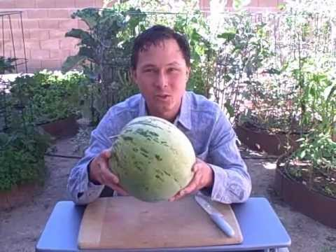 Rare Red Seeded Navajo Watermelon Great for Storage and Desert Growing