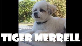download lagu Tiger Merrell - Vines gratis