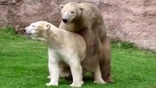 Animals Life Story: Wild animals make love