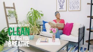 Air-Cleaning Houseplants - HGTV
