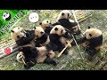 Panda CNY Reunion Dinner | iPanda