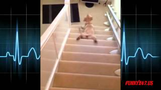 Laziest Dog Sliding Down Stairs