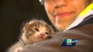 Kitten saved from trash compactor