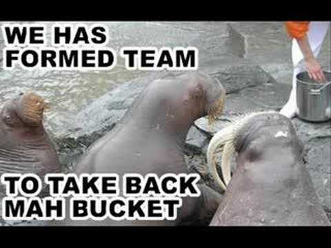 funny walrus photos  YouTube