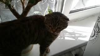 Кошка зовет маму