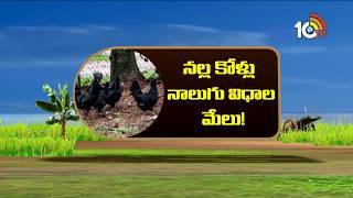 నల్ల కొళ్లు నాలుగు విధాల మేలు | Matti Manishi  News