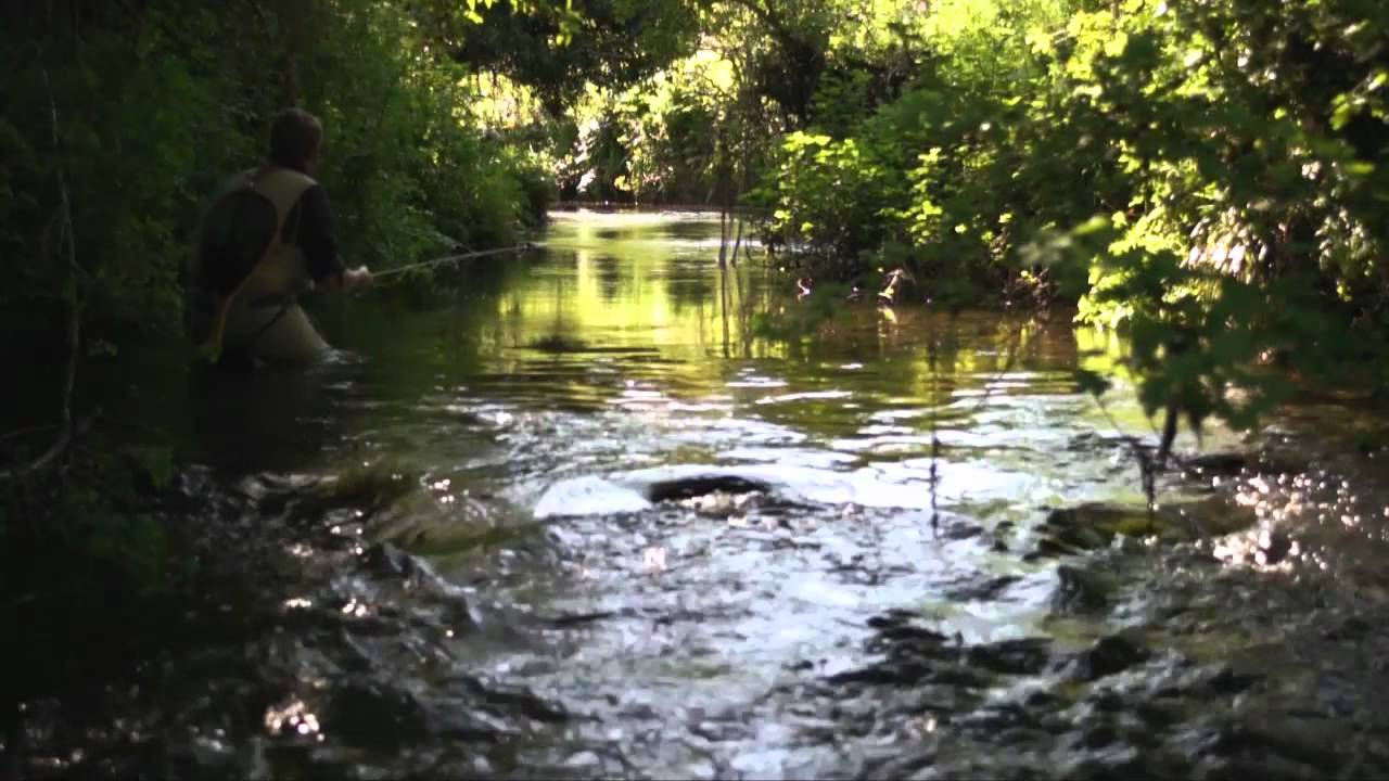 Overgrown fly fishing for wild brown trout on an english for Fish and stream