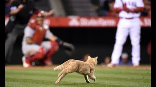 MLB: Animal Interference
