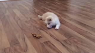 Cachorrinho lindo brincando com osso