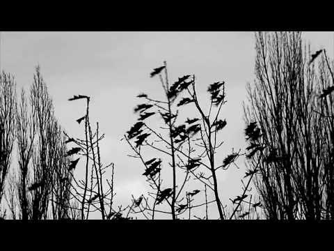 Devendra Banhart - Remember