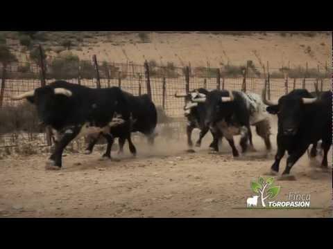 Finca Toropasión - La emoción del toro bravo y el caballo