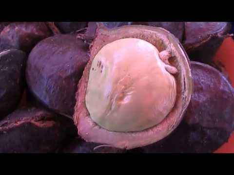 Borneo Fruits & Food-How To Eat Jering-Archidendron Pauciflorum/Jiringa
