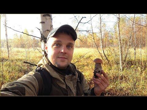Осенние Подосиновики крепыши | Зонтик Пёстрый - где и когда собирать | За грибами в Сентябре 2018