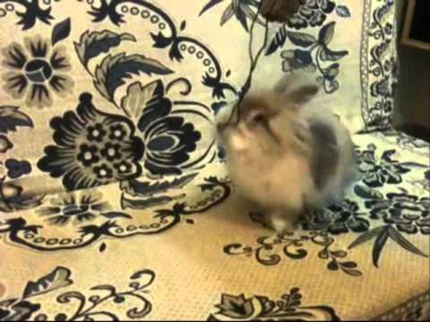 Chuly Poni El Conejo Guitarrista