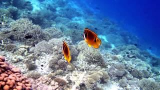 House reef snorkeling in Vilamendhoo Resort