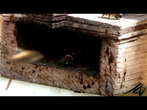 Where have all the honey bees gone? - YouTube