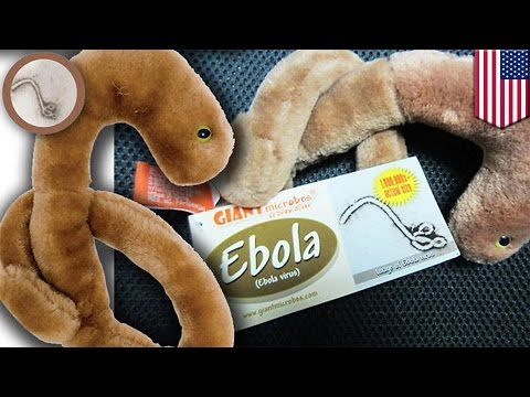 Ebola toy 'selling like hot cakes': toy company Giantmicrobes can't keep up with demand