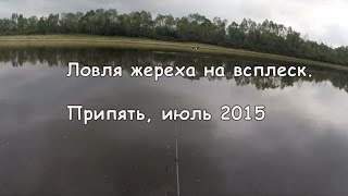 Ловля жереха на всплеск р. Припять 2015 Беларусь Fishing for asp on splash. GoPro