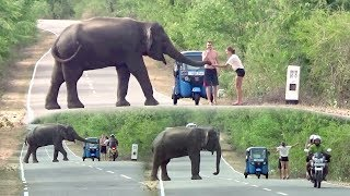 The wild elephant waiting for food !